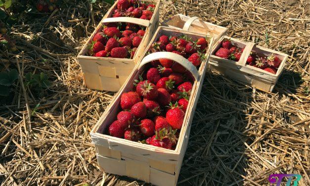 Erdbeermarmelade selbst gemacht – hmmm lecker
