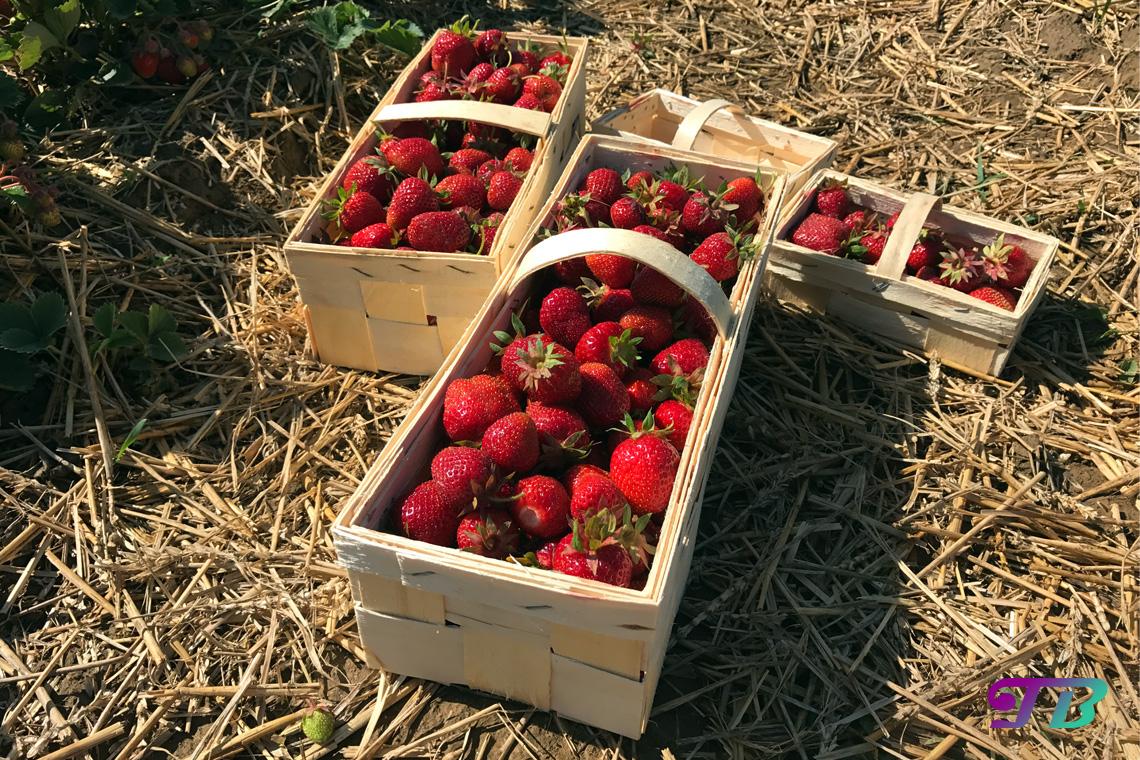 Erdbeeren Marmelade Korb Teenie Blog