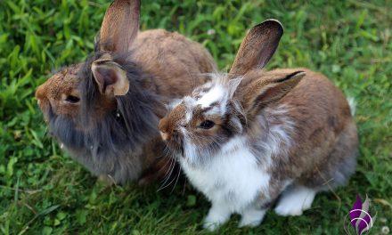 Unser süßer Familienzuwachs – Kaninchen Cookie und Toffee
