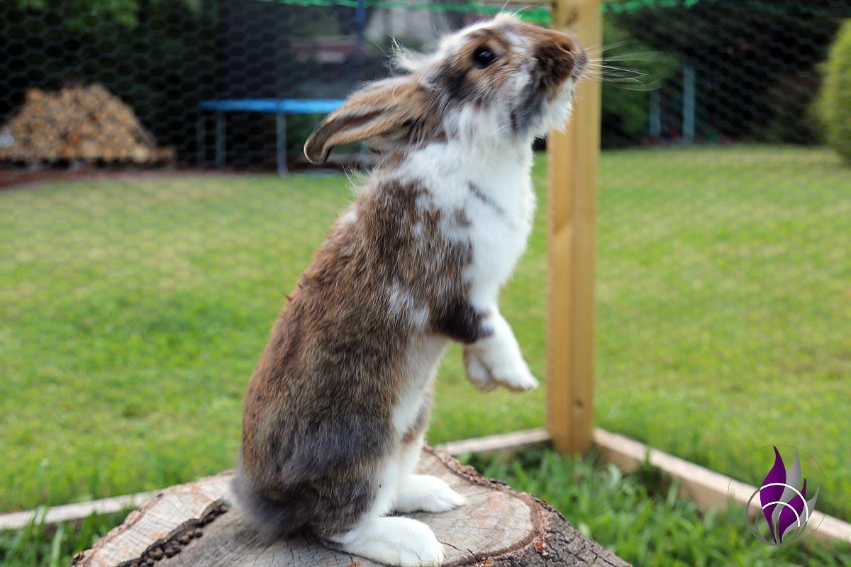 fun4family Kaninchen Hasen Verhalten Verhaltensweisen Männchen