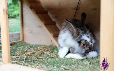 Verhaltensweisen von Kaninchen – unsere Erfahrungen
