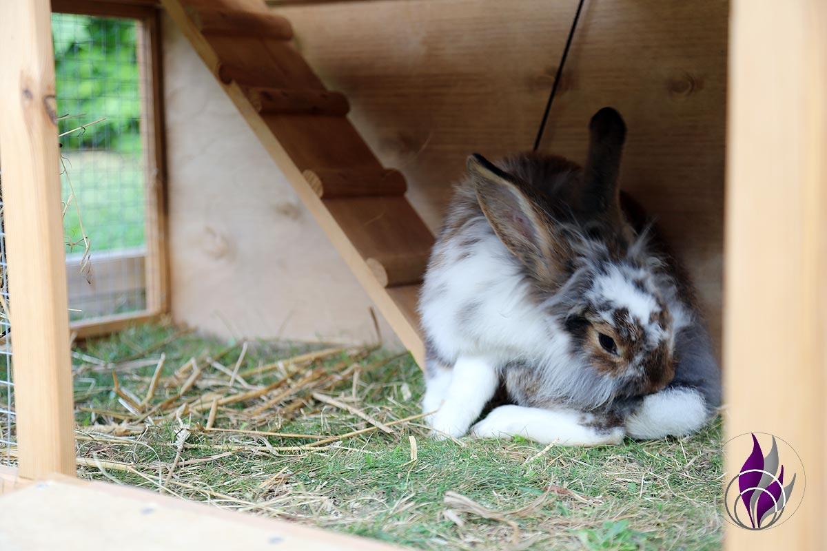 fun4family Kaninchen Hasen Verhalten Verhaltensweise putzen