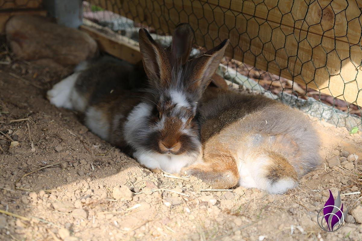 fun4family Kaninchen Hasen Verhalten Verhaltensweisen Sand liegen wälzen