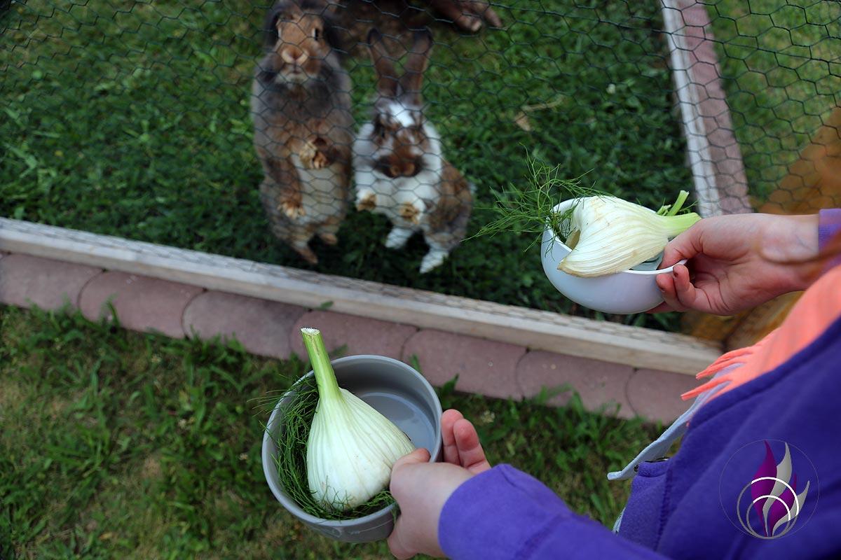 fun4family Kaninchenfutter Fenchel