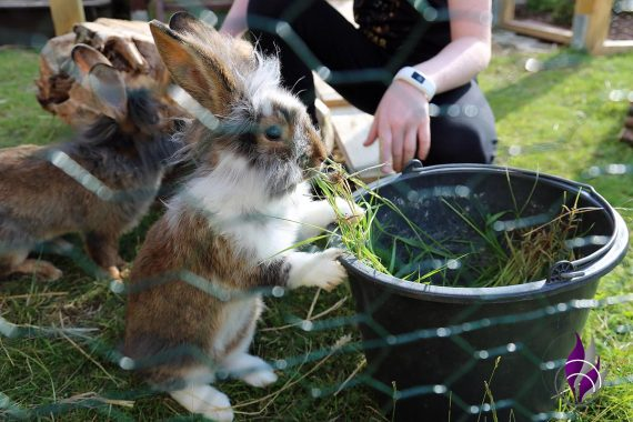 fun4family Kaninchenfutter Gras