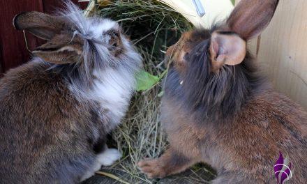 Kaninchenfutter – Was mögen Hasen am liebsten?