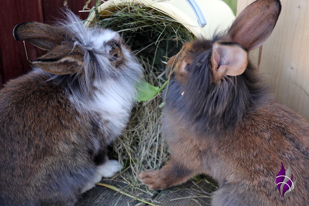 fun4family Kaninchenfutter Gras Heu