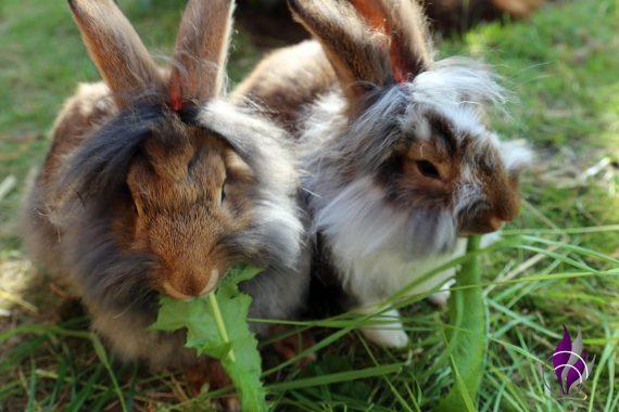 fun4family Kaninchenfutter Löwenzahn