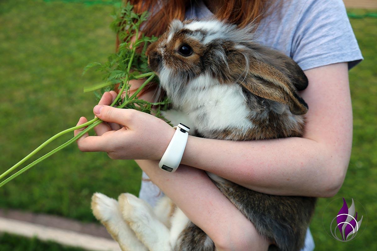 fun4family Kaninchenfutter Möhrengrün