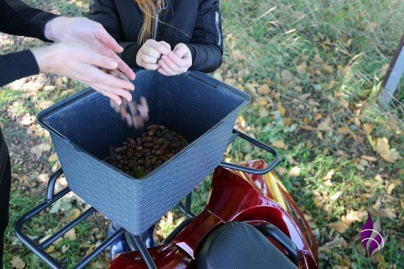 fun4family Herbst Eicheln sammeln