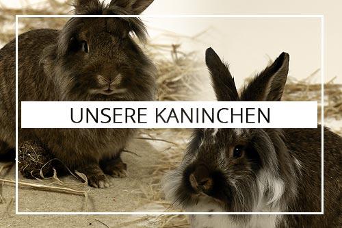 fun4family Special Themen Kaninchen Hasen