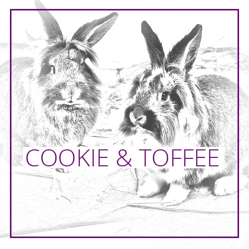 fun4family Autor Petfluencer Cookie & Toffee