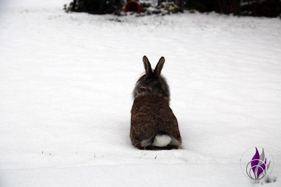 fun4family Kaninchen Hasen Cookie im Schnee Winter