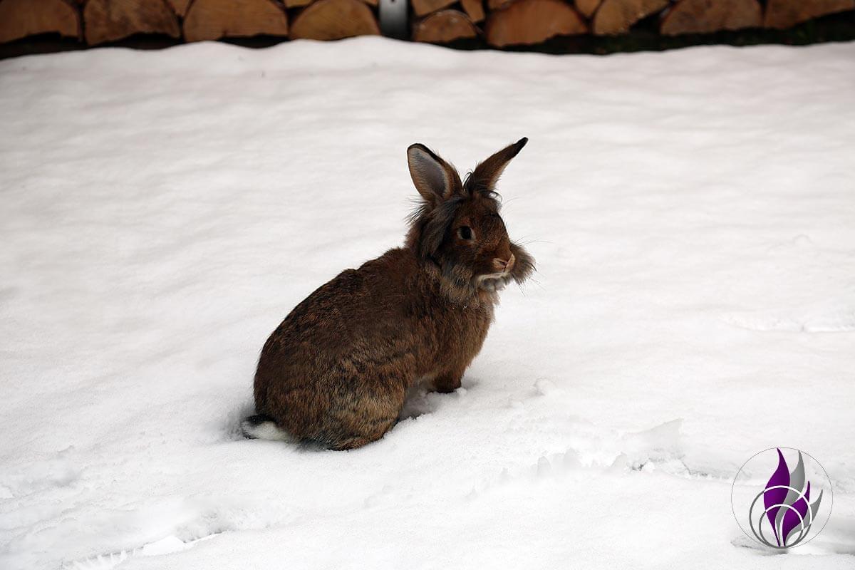 fun4family Kaninchen Hasen Toffee im Schnee Winter