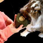 Zahnabrieb und Zahnpflege bei Kaninchen
