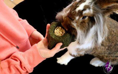 Sponsored Post Zahnabrieb und Zahnpflege bei Kaninchen