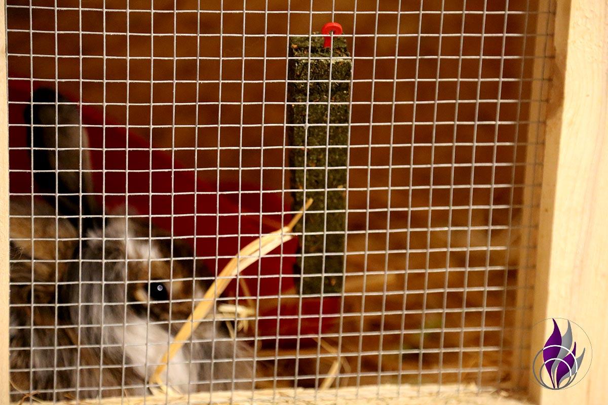fun4family Petfluencer Kaninchen Petersilie Knabbersticks Mr Crumble Halterung