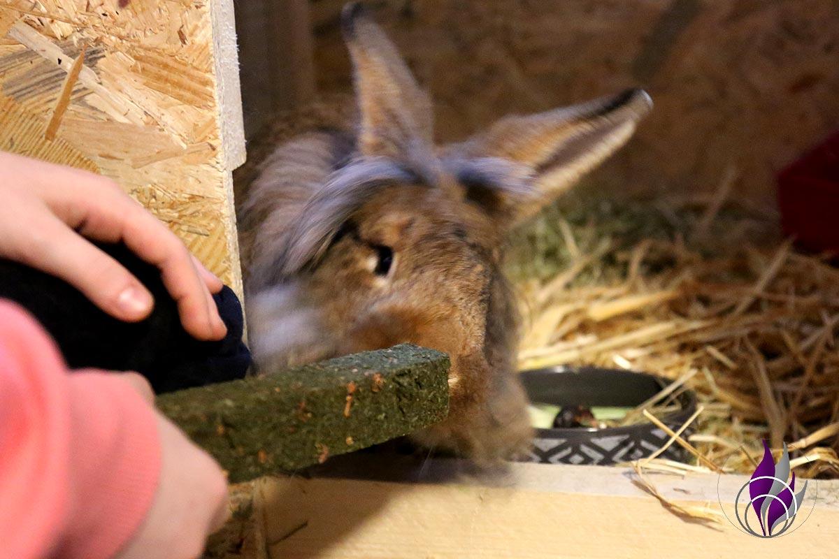"""<span class=""""sponsored_text""""> Sponsored Post</span> Riesen Knabberspaß für Kaninchen – XXL Knabbersticks aus Petersilie"""