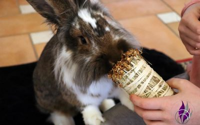 Sponsored Post Knabber Wiesenheustrauß als Kaninchen-Geburtstagsgeschenk