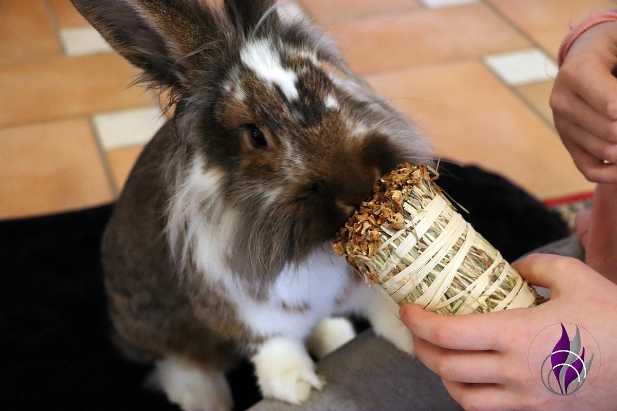 """<span class=""""sponsored_text""""> Sponsored Post</span> Knabber Wiesenheustrauß als Kaninchen-Geburtstagsgeschenk"""