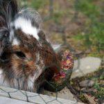 Knabber Herz aus Petersilie mit Käfighalter – Knabberspaß für Kaninchen