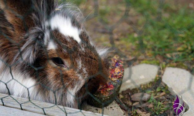 "<span class=""sponsored_text""> Sponsored Post</span> Knabber Herz aus Petersilie mit Käfighalter – Knabberspaß für Kaninchen"