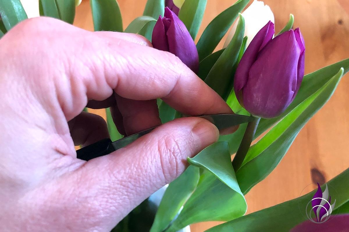 Tulpen Tulpestrauß Tulpe einstechen