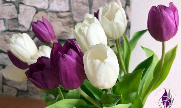 Tulpen Zeit – Unsere Tipps für eine lange Freude am Tulpenstrauß